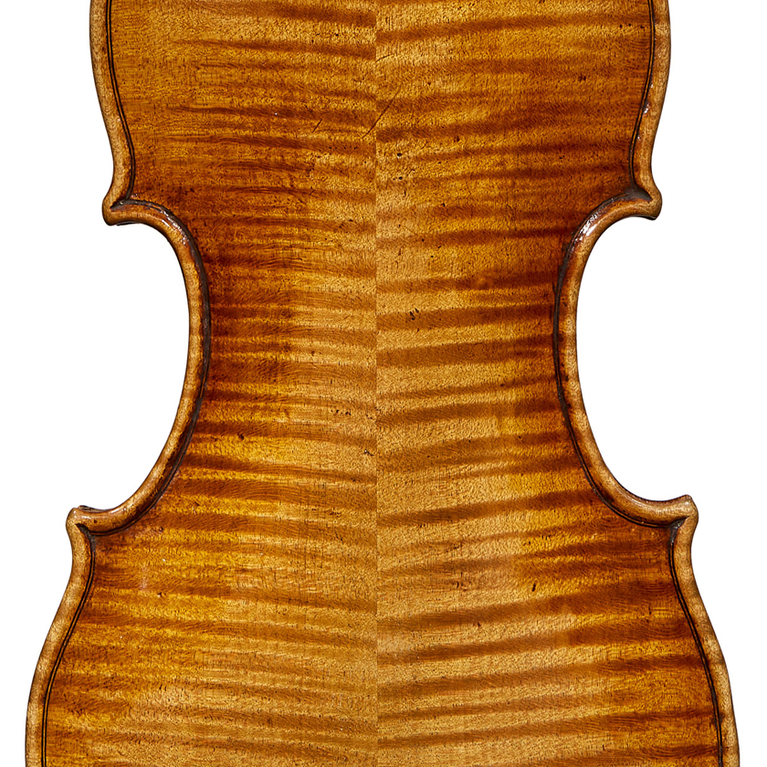 Voller violin back