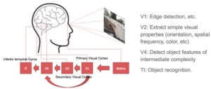 visual cortex system